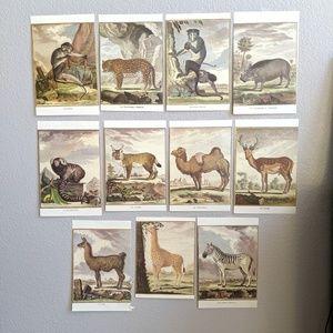 Set of 11 Vintage Animal Calendar Prints Pages